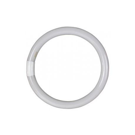 Tubo fluorescente circular 32 w.